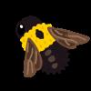 クマンバチは航空力学的に飛べるはずがない?!