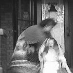 ある老人の秘蔵怪奇写真集
